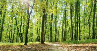 Голова Закарпатської ОДА Олексій Петров роздає в оренду закарпатські ліси (документ)