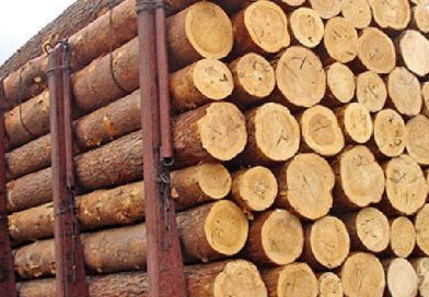 Уряд пропонує, як виконати рішення арбітражу ЄС про ліс-кругляк